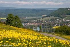 Ausblick von einer Bergwiese voller gelb blühendem Löwenzahn auf Stein am Rhein