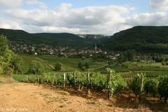 Blick über die Weinberge hinter dem Campingplatz von Arbois. Im Tal sieht man das Nachbardorf Mesnay.