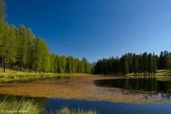 Blick von Norden über den Lac de la Roue mit seinen vielen Wasserpflanzen