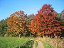 Bunte Ahornbäume in der Nähe der Wakenitz