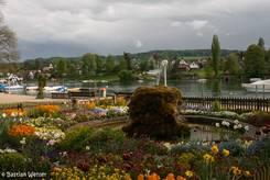 Bunte Blumen am Rheinufer