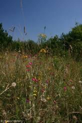 Bunte Wiesenblumen trotz der großen Trockenheit im Juli 2010