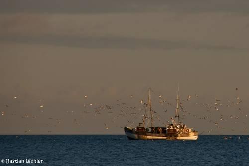 Der Fischkutter MS Charlotte im Abendlicht auf der Ostsee in der Lübecker Bucht vor Niendorf