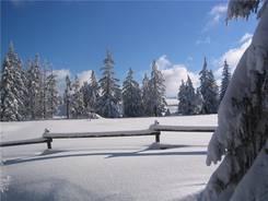 Der folgende Tag begann mit strahlenden Sonnenschein - Im Wald bei Torfhaus