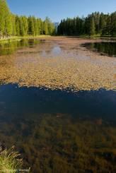 Der Lac de la Roue mit seinem klaren Wasser und den unzähligen Wasserpflanzen
