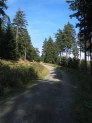Der Weg hinauf zum Wurmberg