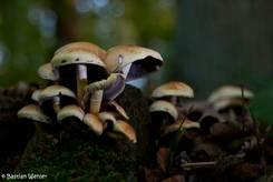 Die gleiche Gruppe von Pilzen in einem anderen Ausschnitt