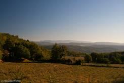 Ein abgeerntetes Lavendelfeld am Ausgangspunkt der Wanderung zum Mourre Nègre unweit von Auribeau