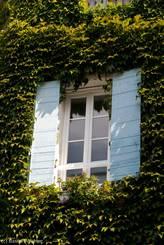 Ein Fenster umgeben von wildem Wein