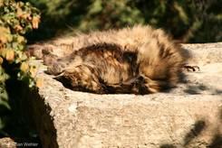 Eine langhaarige Katze faulenzt in der Sonne Südfrankreichs