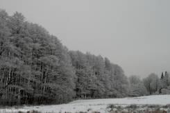 Grauer Wintertag am Stadtrand von Lübeck