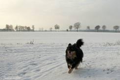 Hund: Laufen im Schnee