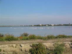 Lagune mit Flamingos am Rand von Saintes-Maries-de-la-Mer