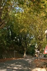 Luberon: Platanen am Ortseingang von Ménerbes