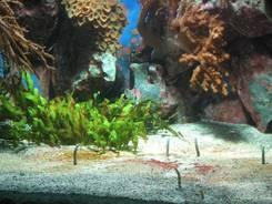 Morgendlicher Ausblick vom Balkon, diesmal mit leicht rotem Sonnenaufgang Nach dem Frühstück sind wir nach Salzburg gefahren, zunächst ins Haus der Natur. Hier: Modell des Potala-Palastes in Lhasa (Tibet) Weiterhin gab es im Haus der Natur auch viele Aquarien: Hier Korallen Eine Garnele Im Meerwasserbecken Ein Rochen Ein Seestern Weitere Korallen Fische, die sich bei Bewegungen vor dem Aquarium sofort in den Boden zurückziehen Eine weitere Abteilung des Hauses der Natur war der Geologie gewidmet: Hier Schwefel auf Aragonit Dioptas Riesiger Amethyst Die Reptilien-Abteilung Ich glaube dieses war eine Baum-Boa Nach dem Besuch des Hauses der Natur, was noch viel, viel mehr als das hier gezeigte zu bieten hatte, gingen wir in die Stadt: Hier Mozarts Geburtshaus Blick durch die Fußgängerzone mit dem Rathaus Pferdekutsche (Fiaker) in der Nähe des Doms Im Dom Kuppel des Doms Der Dom von außen Von der Altstadt sind wir dann noch etwas bergauf Richtung Festung gelaufen, hier ein Trinkwasserbrunnen auf dem Weg Blick Richtung Festung Hohensalzburg von der Richterhöhe aus Wieder zurück in der Altstadt: Erzabtei St. Peter Einer der vielen Plätze umgeben von Häusern Blick auf den Platz vor dem Dom Viele Busse in Salzburg haben eine Oberleitung und heißen dann Obus Die Salzach