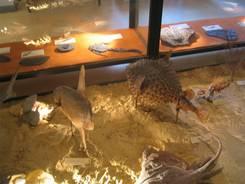 Nîmes: Im Archäologie und Naturgeschichte Museum, welches mehr eine Tierleichenschau bot
