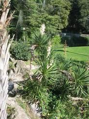 Nîmes: Verschiedene mediterrane Pflanzen im Park