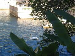 Nîmes: Von diesem Becken aus fließt das Wasser durch den Park