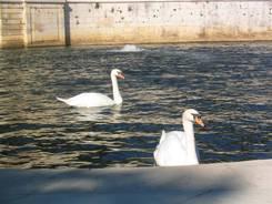 Nîmes: Zwei Schwäne im Park