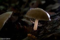 Nochmal der selbe Pilz