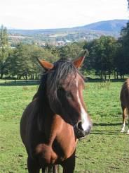 Pferd auf der Wiese am Goldberg