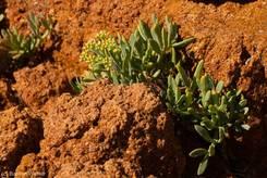 Pflanzen in den roten Felsen direkt am Wasser