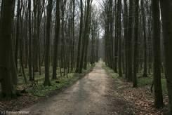 Schellbruch: angrenzender Wald