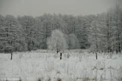 Schnee und Raureif auf Wiesen und Bäumen in der Nähe der Wakenitz