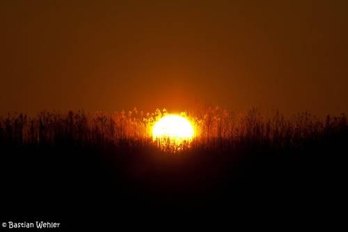 Sonnenuntergang an einem kalten Wintertag am Stadtrand von Lübeck