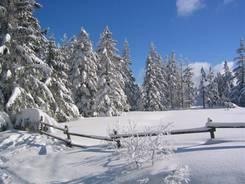 Traumhafte Schneelandschaft im Harz