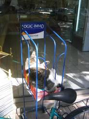 Uzès: Eine Katze in einem Zeitungsständer am Straßenrand