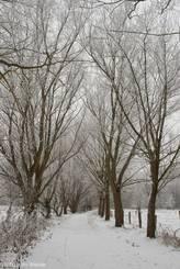 Verschneiter Drägerweg bei Lübeck