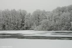 Vom Raureif weiße Bäume an der Wakenitz bei Lübeck