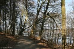 Waldweg durch die Hügel oberhalb des Schaalsees