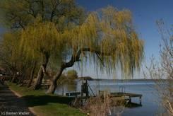 Weide im Frühling am Ufer des Schaalsees
