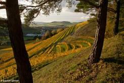 Weinberg am Hohentwiel in buntem Herbstlaub