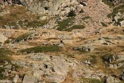 Weit abseits des Wanderweges sitzt ein Geier (ganz klein mittig im Bild)