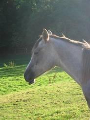 Weiteres Pferd