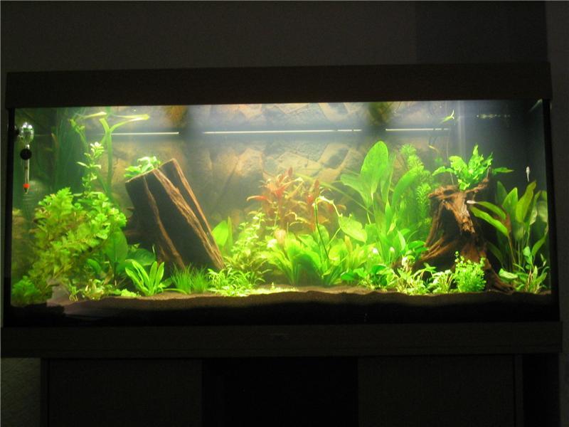Aquarium for Aquarium einrichtung